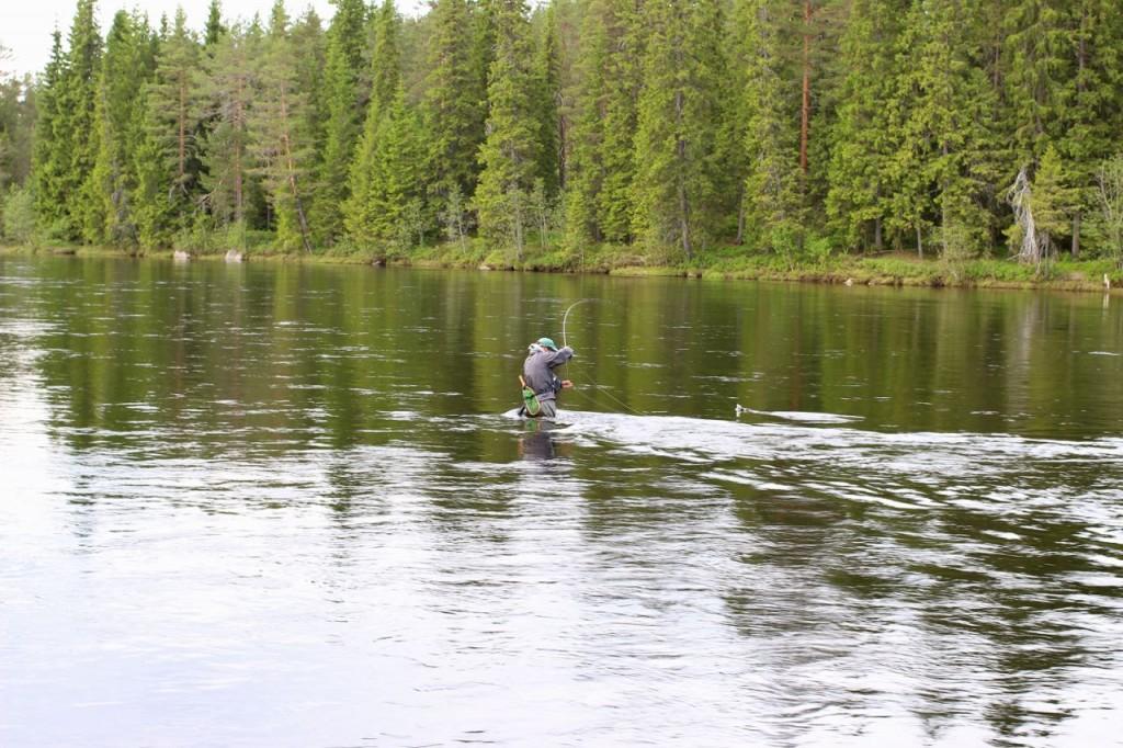 Amazing dry fly grayling fishing
