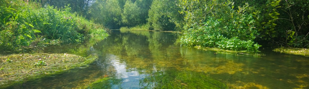 Dorset Chalkstreams Club
